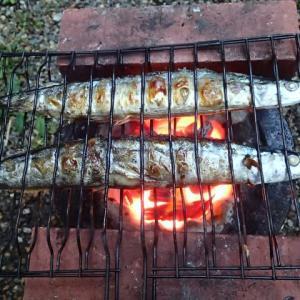 禁断の秋刀魚