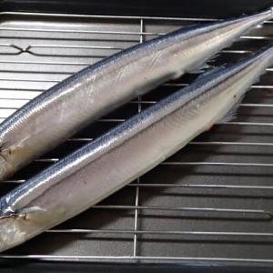 初秋刀魚!