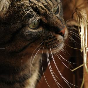 【ライターの仕事履歴】「猫背」と「猫背はモテるの?」について書きました