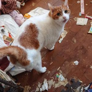 「ゴミ屋敷で飼われていた老猫の里親さんを至急募集しています。~滋賀県」