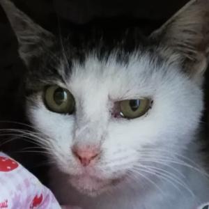 「外で頑張ってきた体重2kg?!の母猫の家族を緊急募集~愛知県」