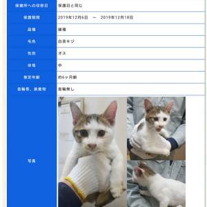 「保護活動までできない、でも犬猫の命を助けたい。という方はポステイングボラはどうですか?~香川県」