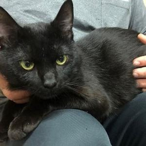 「負傷猫のため命の期限が付いてしまいました~北海道室蘭市」