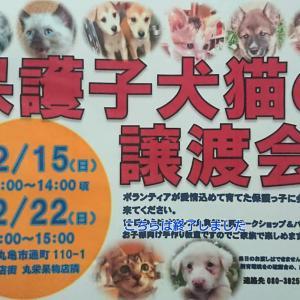 「香川県の2団体がコラボで譲渡会を開催します~香川県」