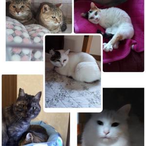 「宮崎県の保護犬猫たちの為に応援をお願いします~宮崎県」