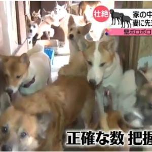 「飼い主も何頭いるのかわからない~家崩壊…中型犬60頭超~埼玉県」