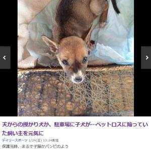「もうボクの事で泣かないで:愛犬の49日の次の日に子犬を保護~バリ島」