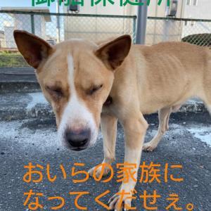 「5つしかない犬舎に10頭の犬たちが収容されている~熊本県は殺処分ゼロではありません」