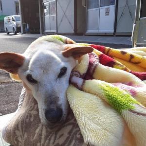 「3年半以上も老犬の世話をして天命を全うしてくれた保健所~名古屋市動物愛護センター」