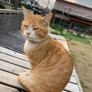 「また・・外飼いの猫が犠牲になってしまいました~三重県」