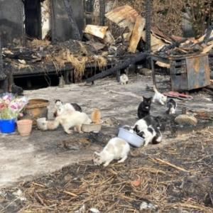 「火事で飼い主が居なくなった焼け跡にうづくまる猫たち~香川県」