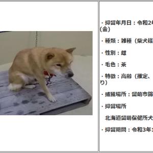 「-2℃のクリスマスの日に棄てられていた老犬~北海道」
