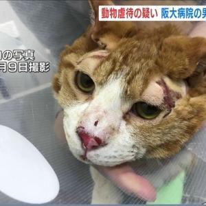 「飼い主にストレスが理由で大やけどさせられた猫~大阪府」