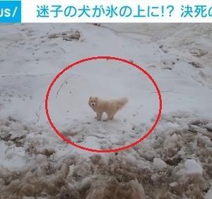 「1週間以上、流氷の上で漂流していた犬を保護~ロシア」