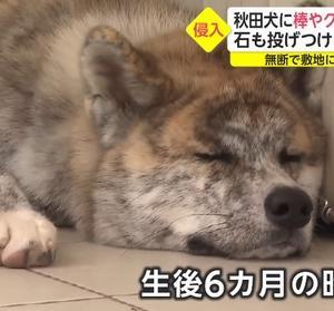 「犬猫の事がカワイイと思うなら、お家の中に入れてあげてください~神奈川県」