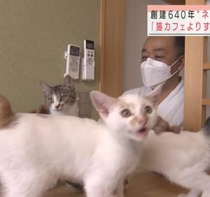 「野良猫を保護して譲渡するお寺は猫だらけ~千葉県」
