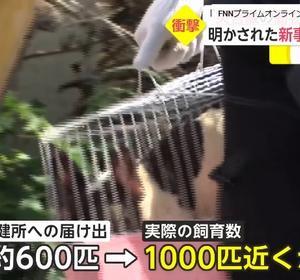 「過去最大の犬虐待繁殖施設を告発~長野県」