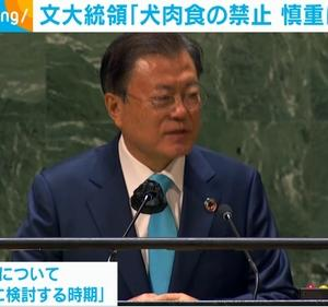 「犬肉食文化の禁止へ慎重に検討~韓国文大統領」