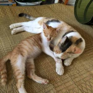 「子供を亡くした母猫と親を無くした子猫が出逢って本当の親子以上に:一緒に迎えてくれる方を募集します~福岡県立花高等学校「命のつなぎ方」」