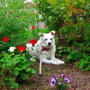 花とアズキ