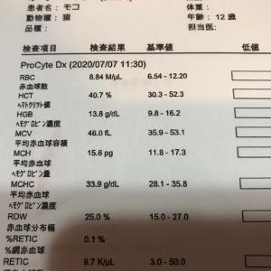 猫の手作りご飯歴9年!!結果発表!