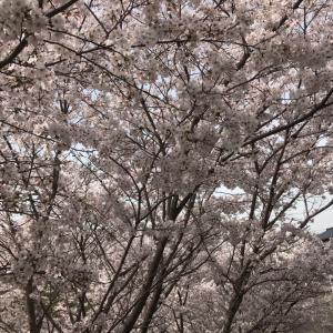 春なのにー