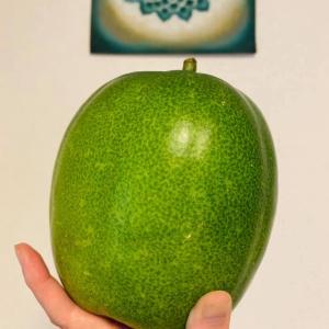 旬の冬瓜を食べましょう。