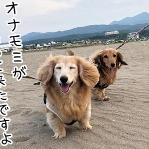 自由犬とエロジジイまっしぐら犬