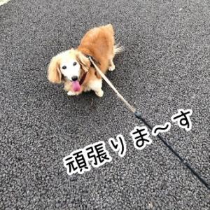 楽しそうに歩け