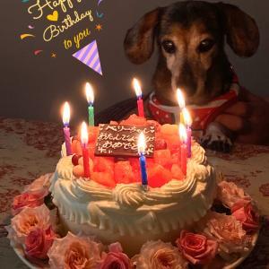 ベリー 16歳のお誕生日を迎える事が出来ました♡