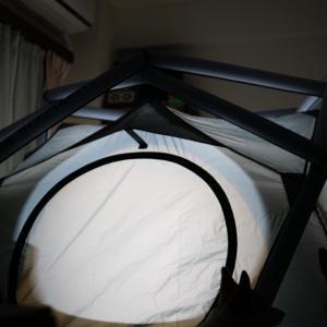 【テント泊2、3日目】ウチの子記念日