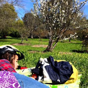 ここの桜はまだ早い