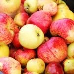 りんごのゆくえ