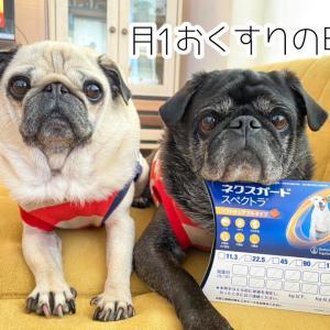 #毎月1日はネクスガードスペクトラの日!!!