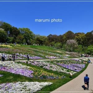 横浜の花で彩る大花壇
