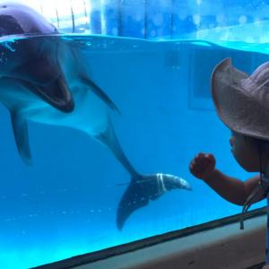 【えのすい】7歳と1歳連れて新江ノ島水族館に行ってきたー!