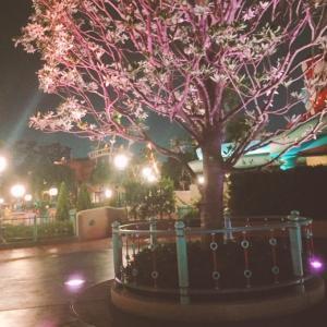 【TDL】夜のお散歩で大発見!!夏なのに桜が咲いてる~!!