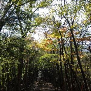 秩父・大持山とウノタワ(1)