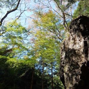 秩父・正丸駅から峠を越えて隣の芦ヶ久保駅まで(1)