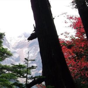 八ヶ岳 みどり池・本沢温泉・硫黄岳(3) しらびそ小屋から本沢温泉へ