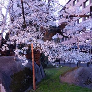 百名山の麓をたずねて(14) 岩手山 石割桜と岩手銀行赤レンガ館