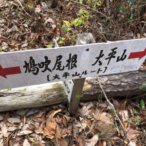 鳩吹山トレーニング。新しいルート開拓。素敵な場所だった。