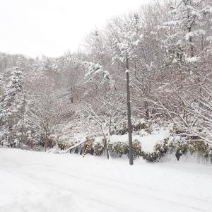 今冬初の大雪!
