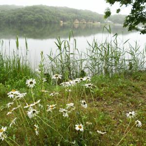 雨上がりの湖畔