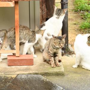 京都浄瑠璃寺のネコ