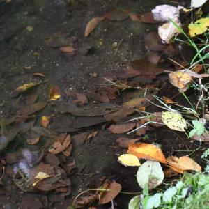 秋が来た!…枯葉が目立つ