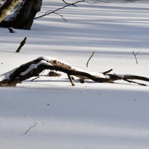 森を歩こう!…第8弾 倒木の魅力