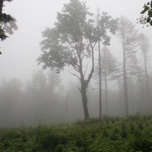 深霧の森…幽玄