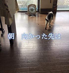 「10月なのに38度」10/6sun