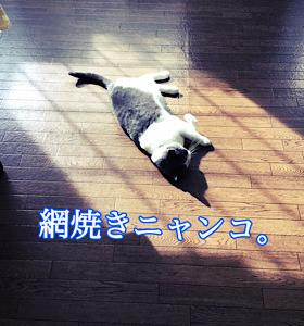 「網焼き」10/11fri